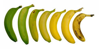 banana ripening image resized 600